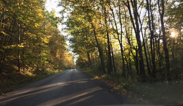 Trees post